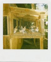 In The Aviary by MaryOfExeter