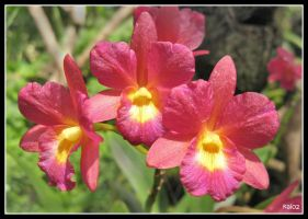 orchid,, 2 by pusakal1402