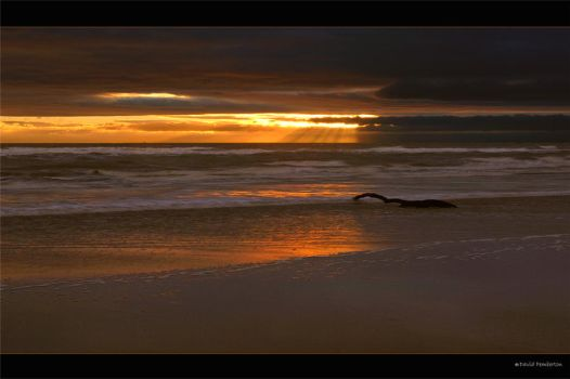 Crosby Driftwood by Davepemb