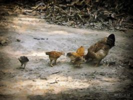 Chicken and his family by rajjib