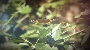 Butterfly by Lacza