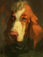Bracco Italiano by Spikie