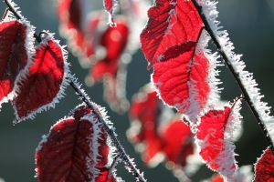 Red and white by SaFik