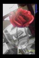 Another Rose by anasinda