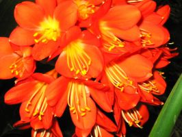 Red flowers by Usherette