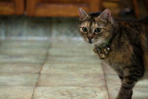 Prowling in the Kitchen. by courtneytartan