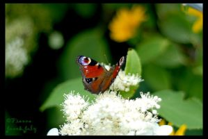 Another Butterfly by fiamen