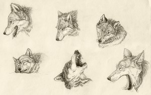 Wolves by Kwazar