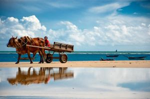 Ox Cart by scastor