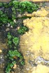 moss and paint texture 5313 by Moon-WillowStock