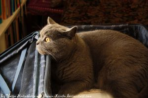 Self-Packing Kitty by Ilman-Lintu