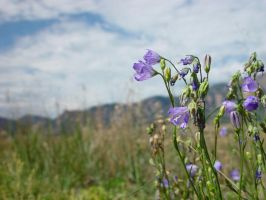 Flowers along Hiking Trail, Boulder #6182 by darenw