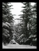 Lost Lake trail, Whistler by DTherien