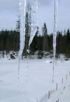 icicle by Bokor