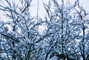 Winter trees 2 by Quinnphotostock