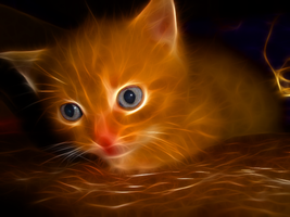 Fractal Cat II by l3viathan2142
