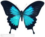 butterfly 4 by kayne-stock