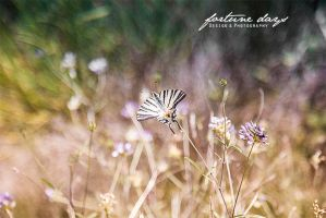 Provence // Summer 2014 by AngelxBaby