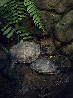 Turtle 02 by NellyGrace3103