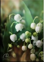 Lily of the Valley -I by MD-Arts
