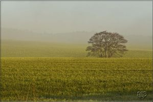 Mid Morning Mist by SnapperRod