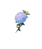 Hortensia test1 by KinectikLover