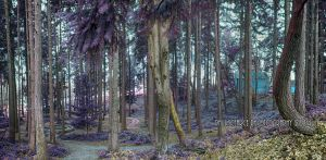 Infrared Panorama Test #1 by SilentMobster42