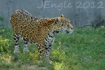 Jaguar 33 by jeppy1982