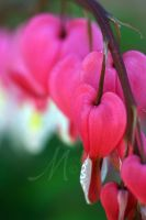 Hearts Alive by InLightImagery