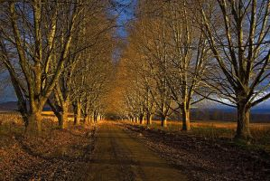 The Road home by carlosthe