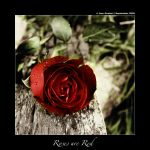 Roses Are Red by IsacGoulart