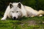 .:waiting for...:. by WhiteSpiritWolf