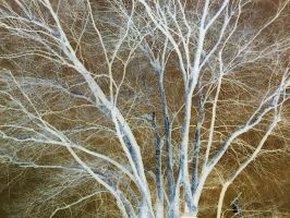 Negative Tree Branches by Tespeon