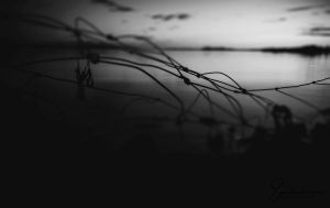 not homewards, not away, and never to return by Elenihrivesse