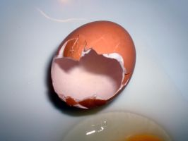 Egg Series 11 by Cynthetic