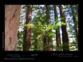 Redwoods Park Estate H006 by aktell