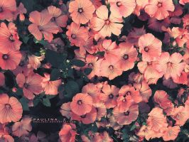 flowers. by Paulinaz