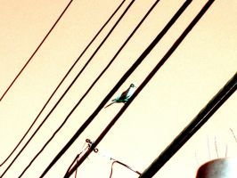Powerlines by DaniDeezNuts