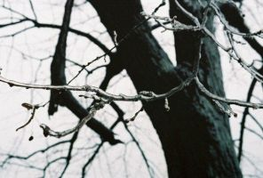 icy finger branches. by TuNages