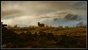 Moorland Watch by Ressurrection
