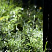 some leaves and grass by rdalpes