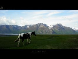 Into the Wild by xmariner