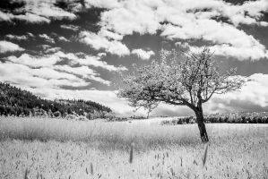 Landscape 2012-I by blackdaddy