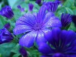 flower by mikas-stock