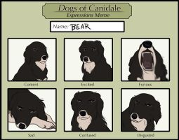 DoC MSE: Bear's Expressions by Tazihound