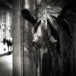 Two horses...II by denis2