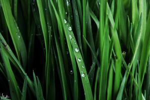 water.Grass2 by Ave117