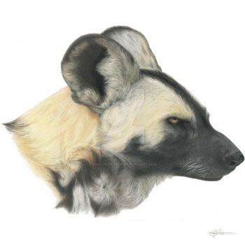 Hasani - African Painted Dog by CSIllustrator