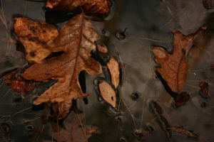 Autumn Adrift by ncphotojunkie