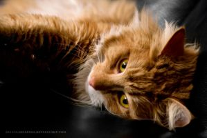 Portrait of a cat by LadyLinda